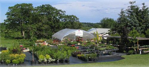viola nursery greenhouse