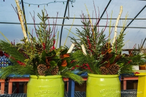 evergreen-planters