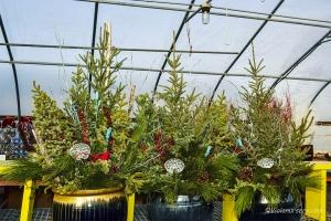 evergreen-planters2