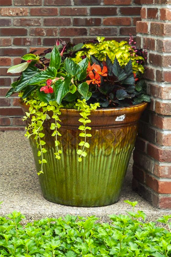 Home Flower Container Garden